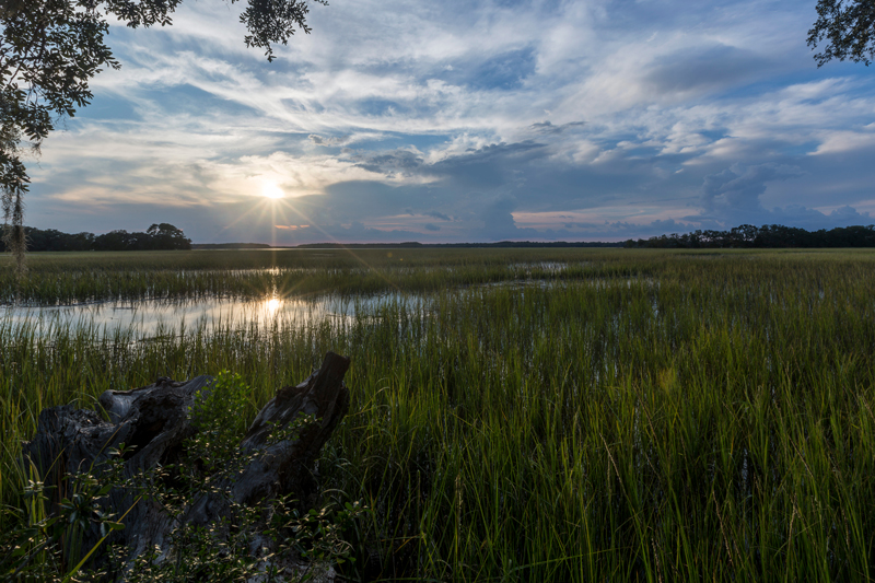 Guide to the Salt Marshes and Tidal Creeks of the Southeastern United States