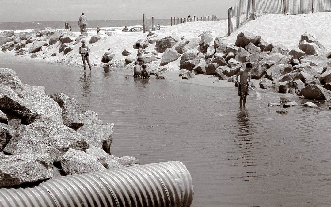 Slowing Stormwater: Improving Water Quality by Imitating Nature