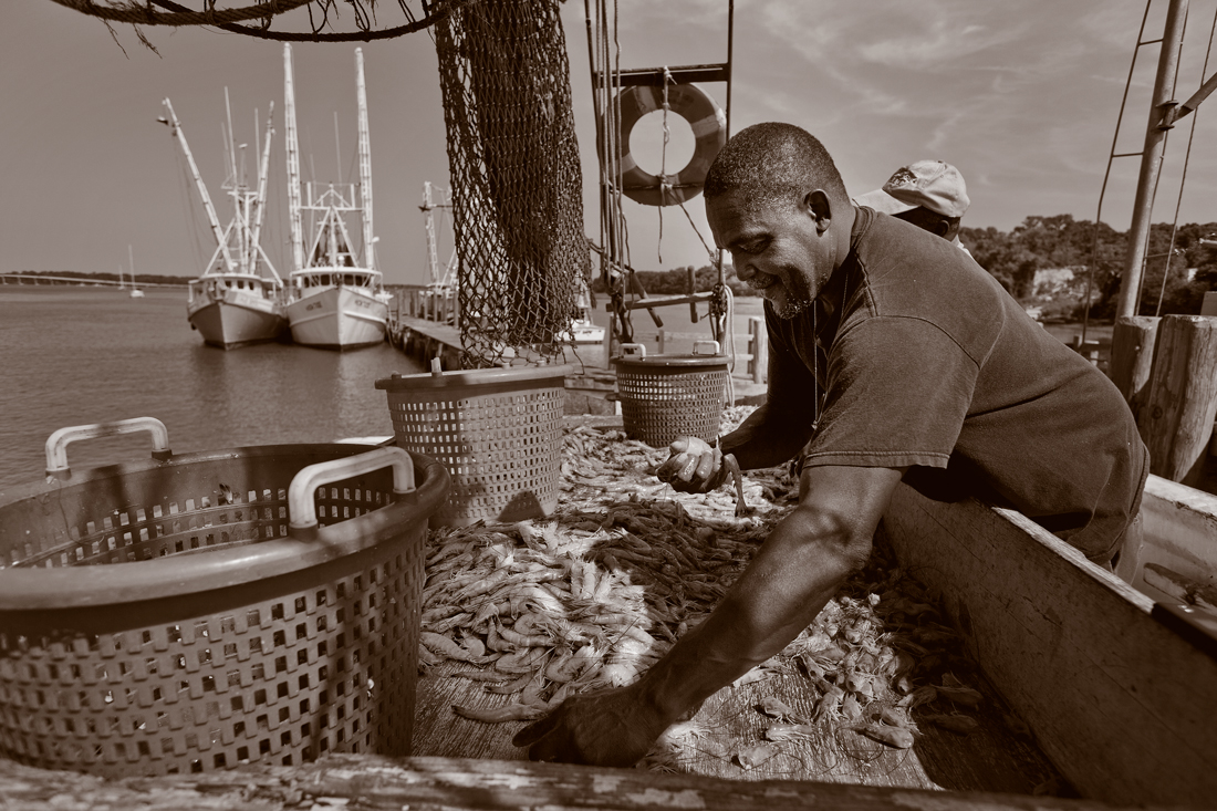 A fisherman with a load of shrimp.
