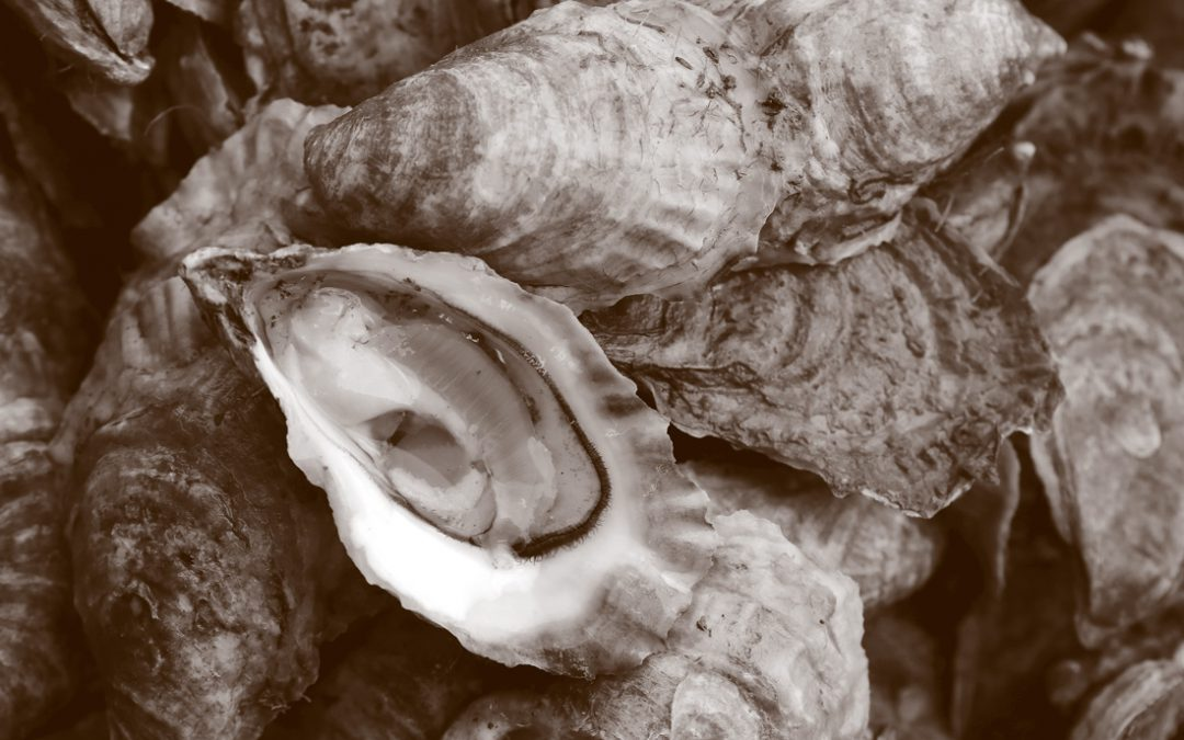 Tank to Table: How Single Oyster Mariculture Works