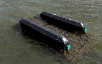 Research Examines Best Oyster Mariculture Practices