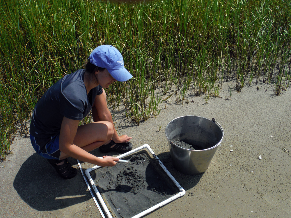 A researcher samples sand in a pan.