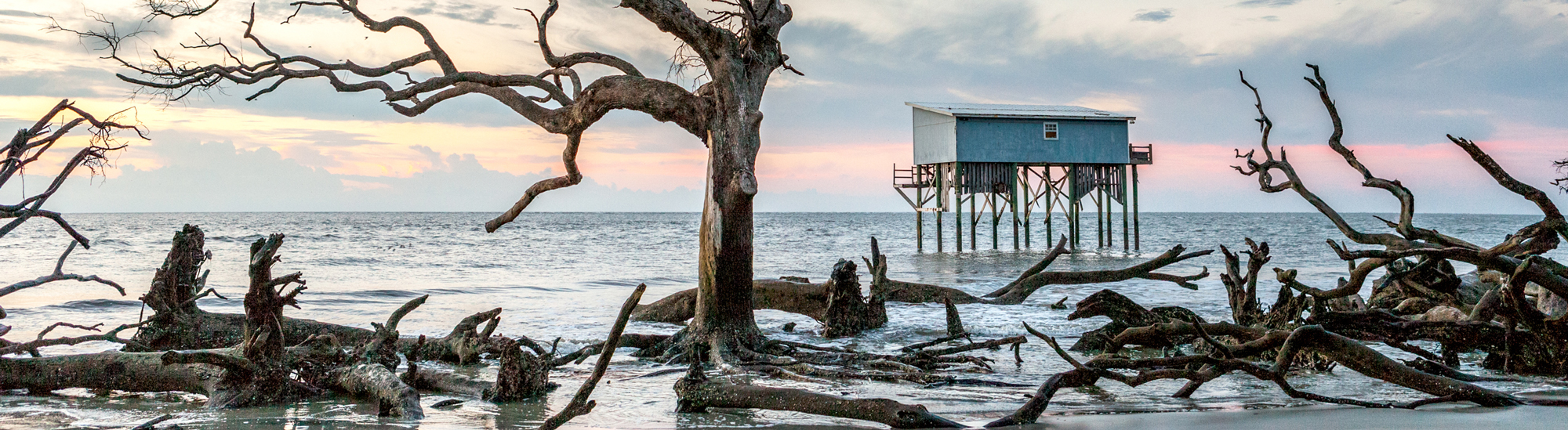 Dead trees and old beach house now covered at high tide.