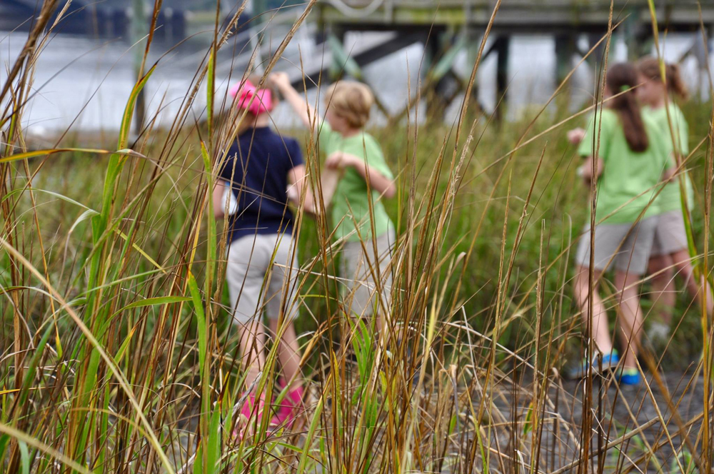 Tall fronds of Spartina grass with young children in the distance collecting seeds.