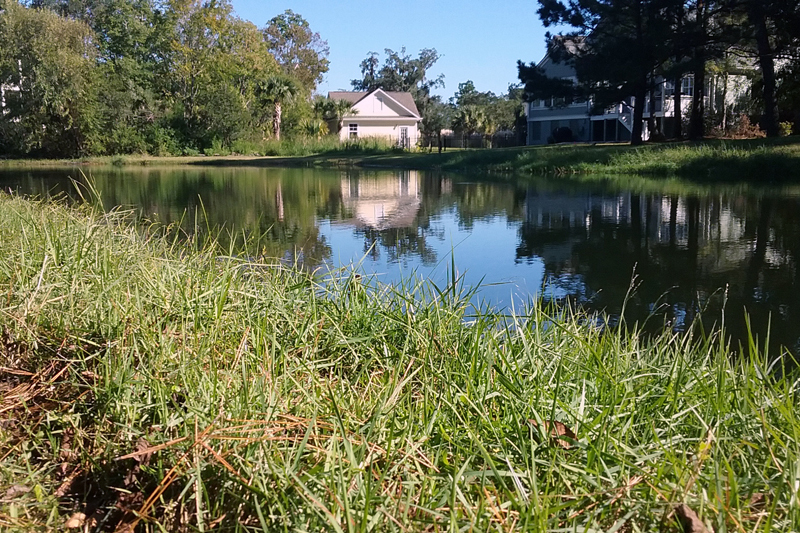 Stormwater pond with house behind it.