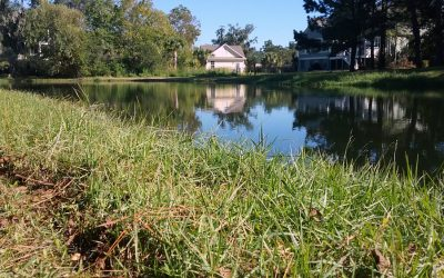 Stormwater Ponds Research Details Benefits