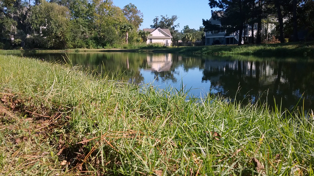 Stormwater Ponds in South Carolina State of Knowledge Report