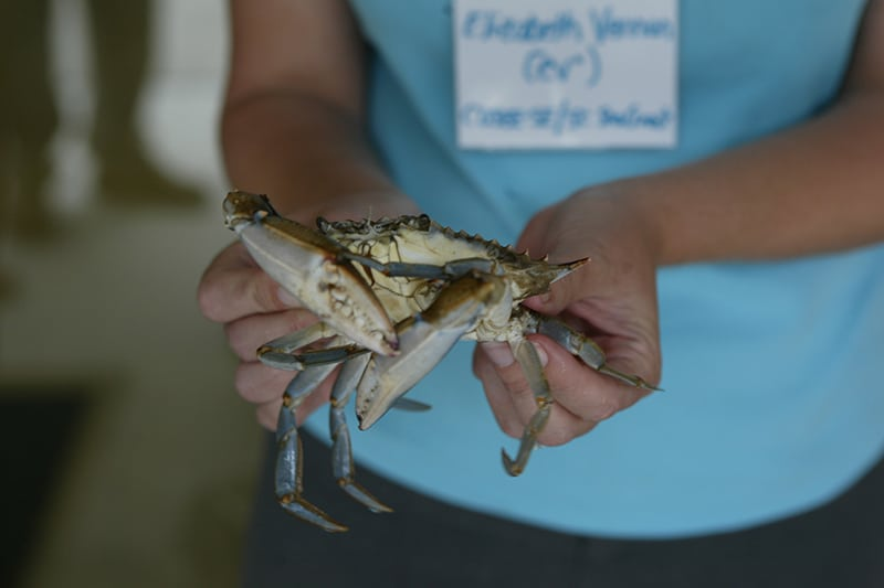 A young student holds a blue crab.