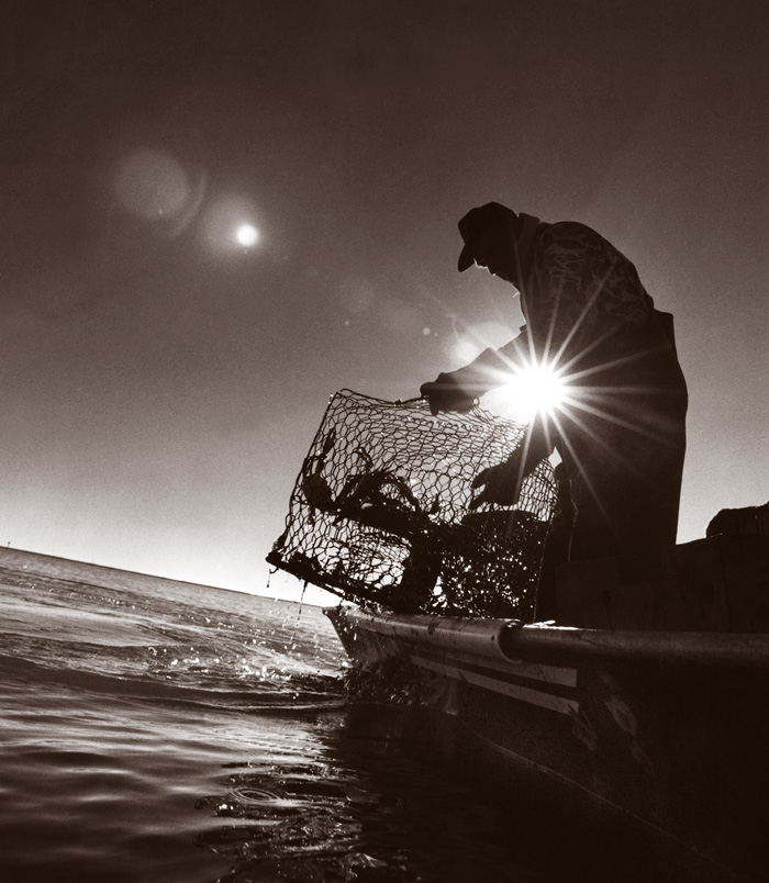 A fisher hauls a cage from the water.
