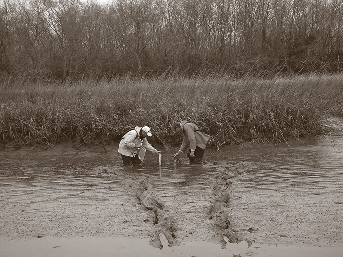 Two researchers in rain gear take measurements in the marsh. They are up to their knees in mud.