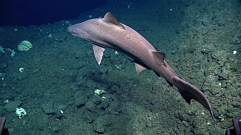 NOAA Highly Migratory Species Funding Opportunity